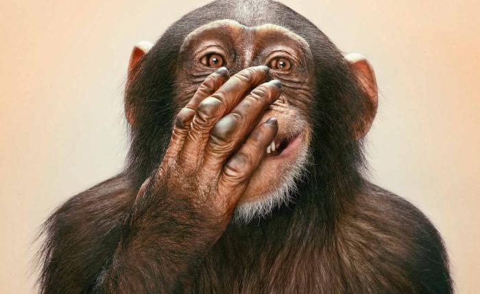 Los chimpancés, los humanos y el «efectodotación»